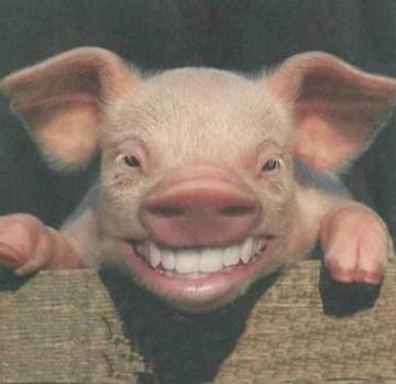Porc lacqué (LS boar inside) 1247830370_4b17afe32b_o