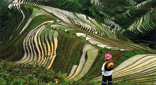 Cultivos de arroz en JApon 2035862974_80fabaaca9