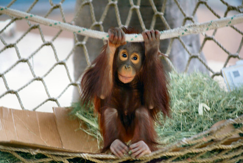 Majmuni 2175204818_0416aa0957