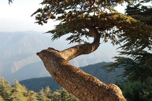 جبال الشريعة من اشهر المناطق السياحية فى الجزائر ر*س*خ*ع 1790549324_e06667c3aa