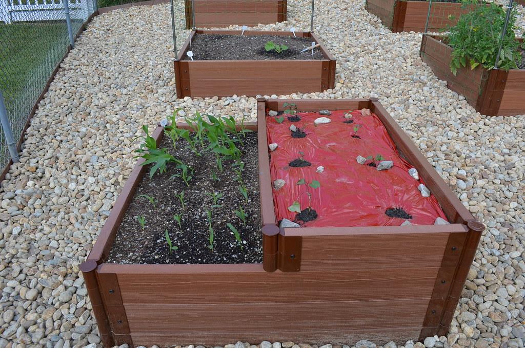 New garden from Dartmouth,MA (pics) 5795038684_1b226d56d5_b