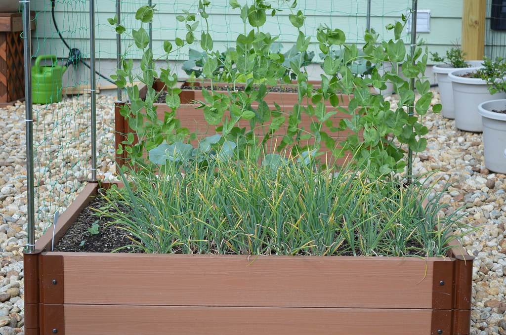 New garden from Dartmouth,MA (pics) 5795033014_298c6849b7_b