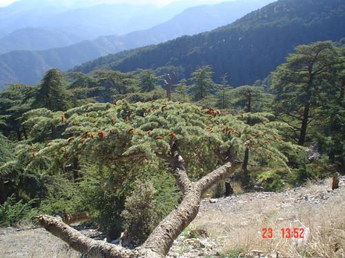 جبال الشريعة من اشهر المناطق السياحية فى الجزائر ر*س*خ*ع 2502313153_dd5190b711