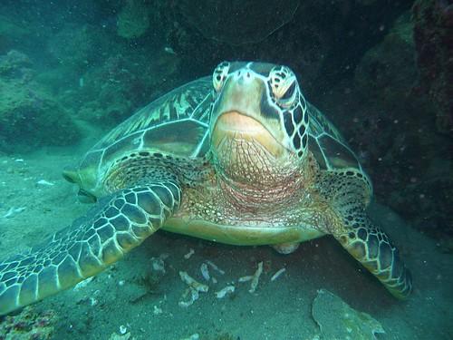 Photos de plongée aux Philippines 3920177265_ca520c4362