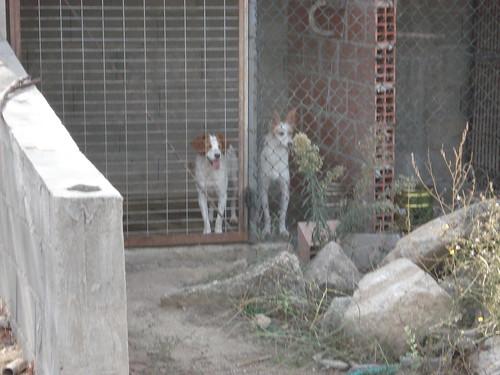 alguns dos meus cães 4031532498_d1244d2a7b