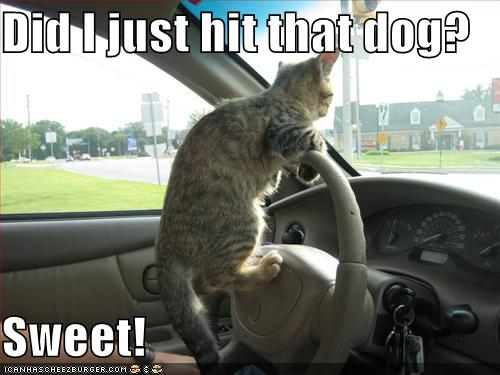 CAT-tastrophes! 3574166834_2e6a21fa77