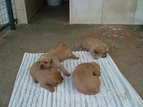 cachorros 3589353153_5a682da07f