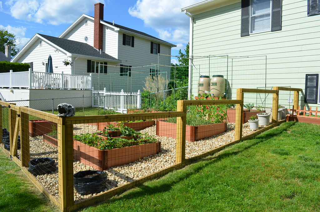 New garden from Dartmouth,MA (pics) 5795028800_cfe17d008b_b