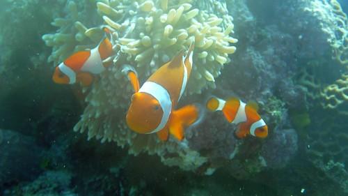 Photos de plongée aux Philippines 3920170381_58963f4858