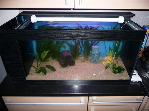 Futur possesseur d'axolotl 3995089598_d400a525f0