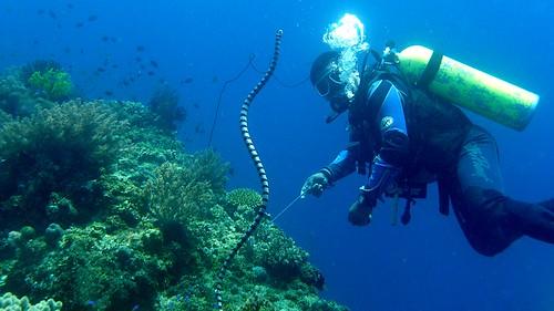 Photos de plongée aux Philippines 3920983818_c79c80aa08