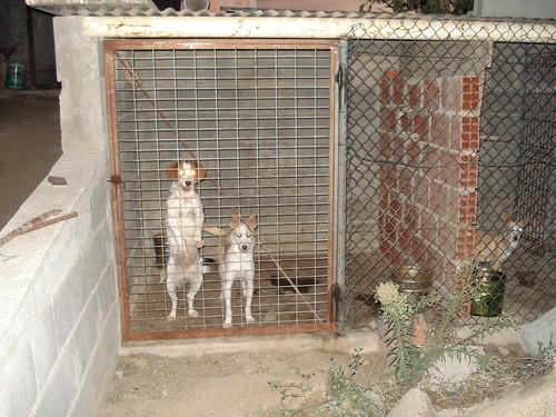 alguns dos meus cães 4031532500_a15bc8267d