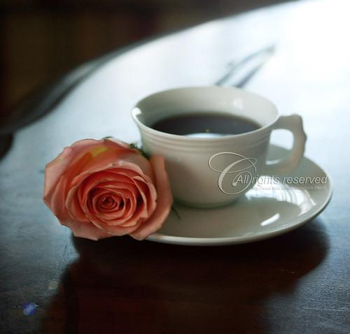 ذرات ملح على فنجان قهوتي !!!  3830682502_7d04853ba2