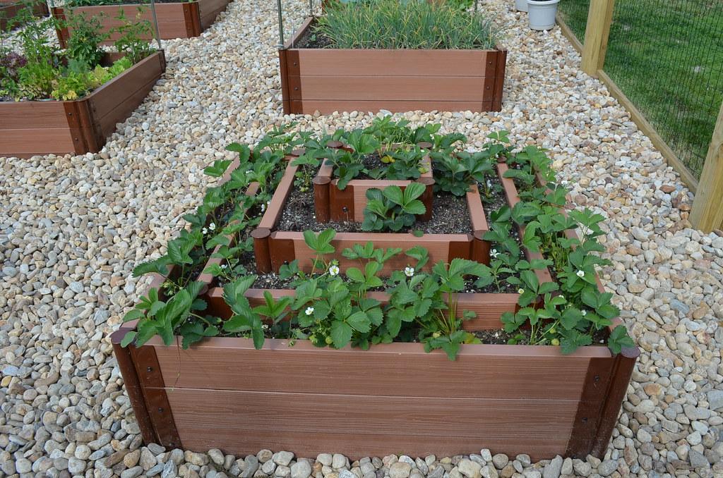 New garden from Dartmouth,MA (pics) 5794474939_24126c08ba_b