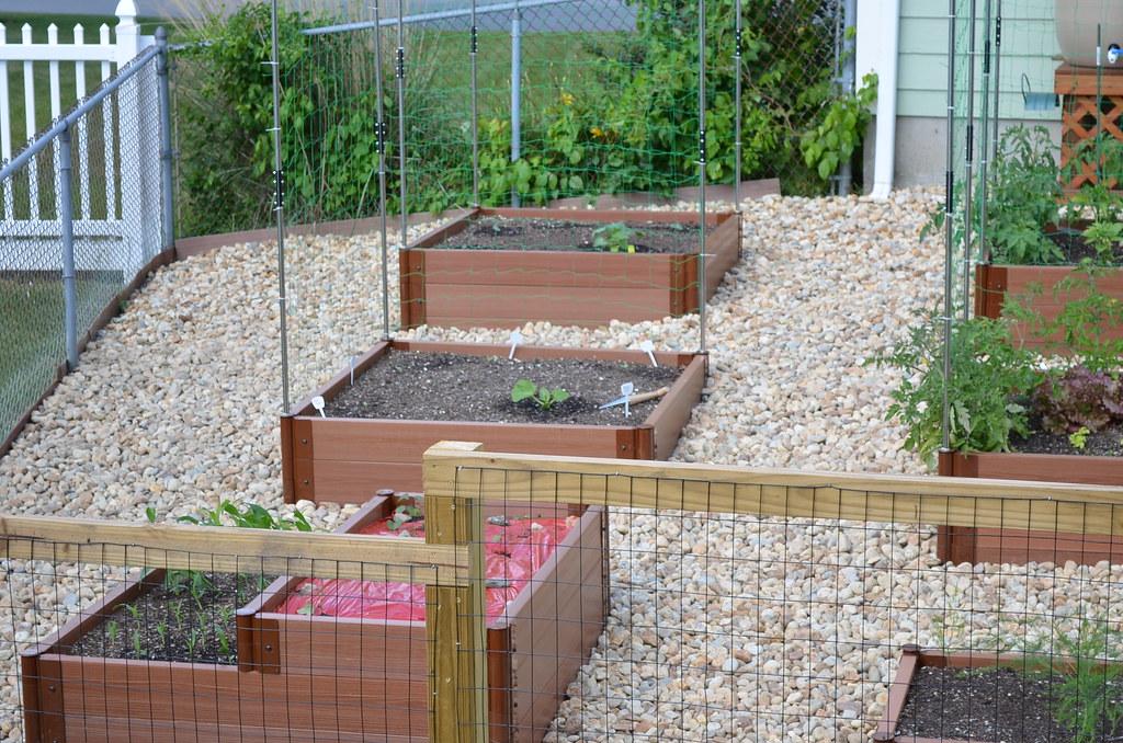 New garden from Dartmouth,MA (pics) 5795023344_107fa23cf9_b