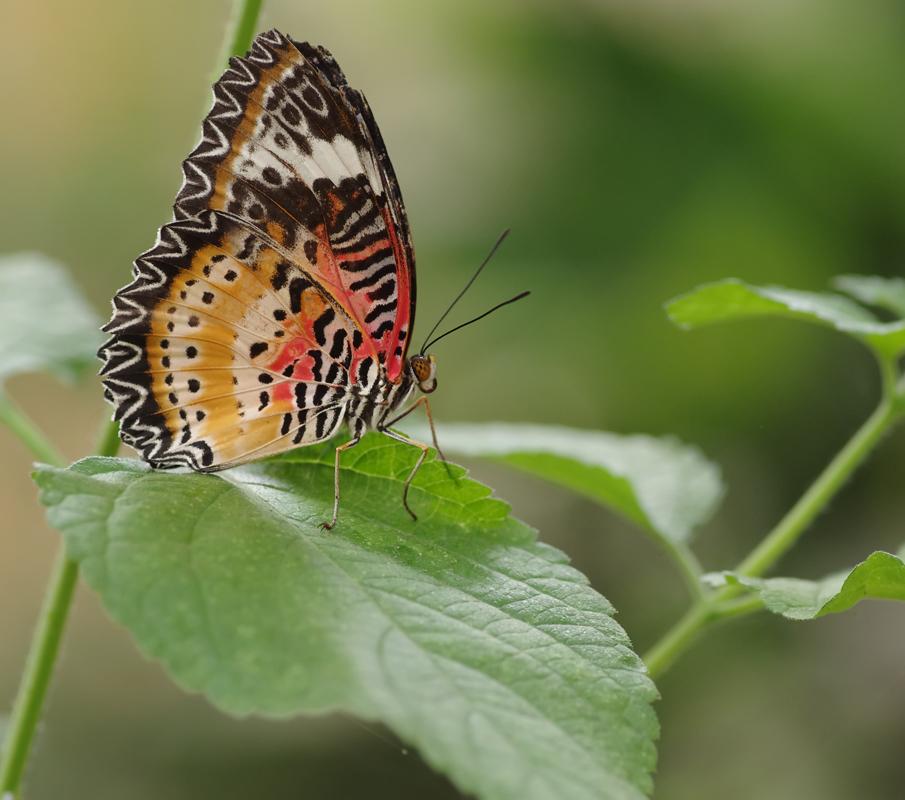 La serre aux papillons la queue en yvelines 5794419028_1e82a11d02_o