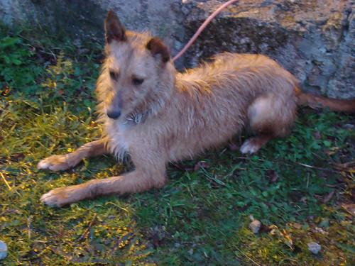 alguns dos meus cães 4031532492_f512e0845a