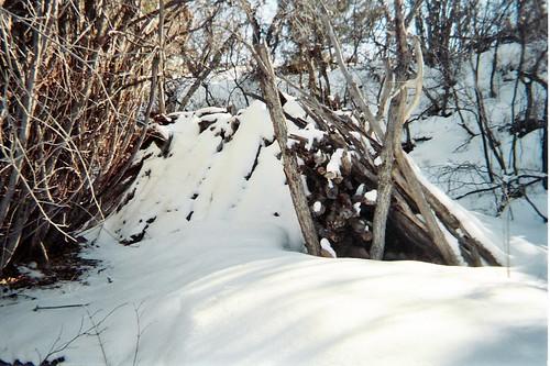 shelter, winter