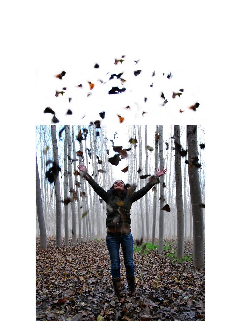 ... Y caen las hojas, llega ....¡¡¡ EL Otoño !!! - Página 6 4086808015_6d00fc040d_o