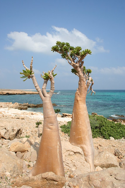 Plantas que parecen de otro planeta 4439450672_5d18613606_z