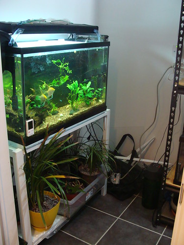Fish room  - Page 2 10682979914_69723d768c