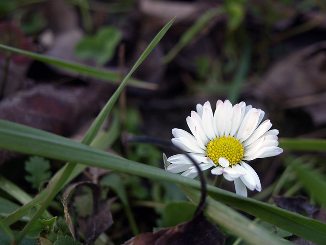 Motiv fotografiranja: Biljke, Cvijeće, Cvijet, Drveće... - Page 2 11931515514_8fe4dcfe35_z