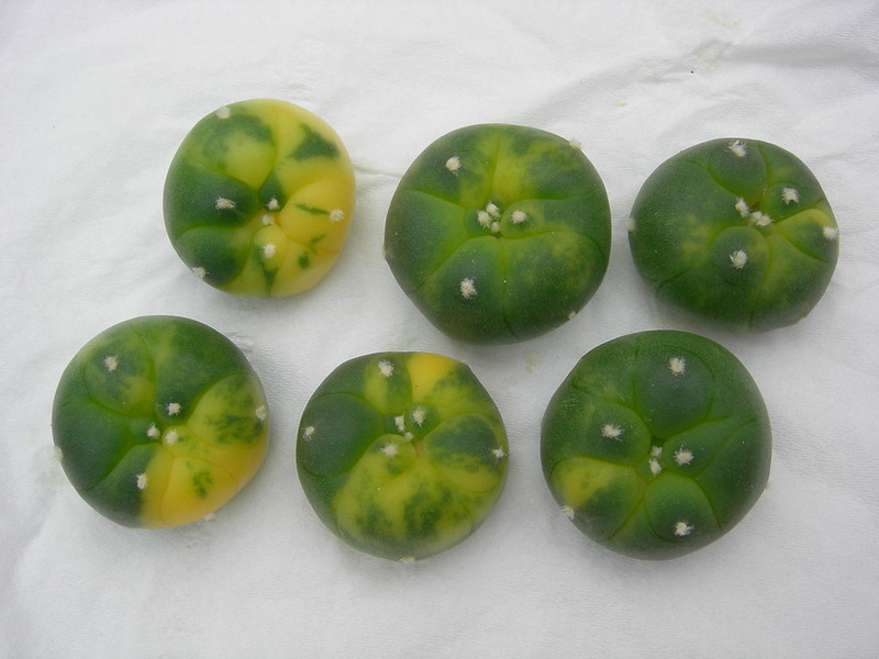 Colourful buttons!