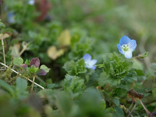 Motiv fotografiranja: Biljke, Cvijeće, Cvijet, Drveće... - Page 2 11931816406_5df61086dc_z