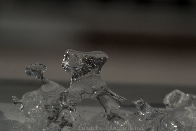 Fotografierea fulgilor de zăpadă cu obiectivul macro Nikon 60 mm f/2,8 12235462876_3027bdfd8a_z