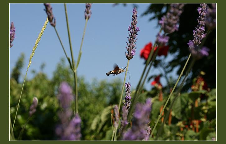 Dans le jardin des Minuscules... 9348702097_d0fec65549_o
