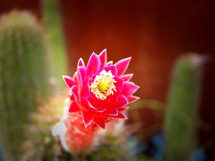 Royal Botanic Gardens Sydney - Succulent Garden (Image Heavy) 3009422881_9b77681f40_o