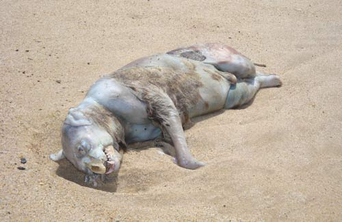 Mounstro En Las Playas De Nueva York 2728158720_02b682eda9_o