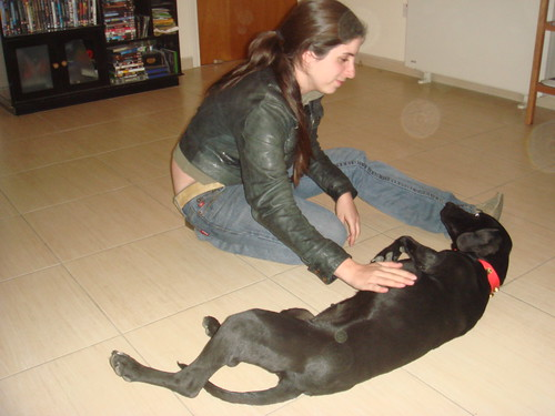 Black pointer-type found in Nicosia on March 4th 2310187741_641afb06b9