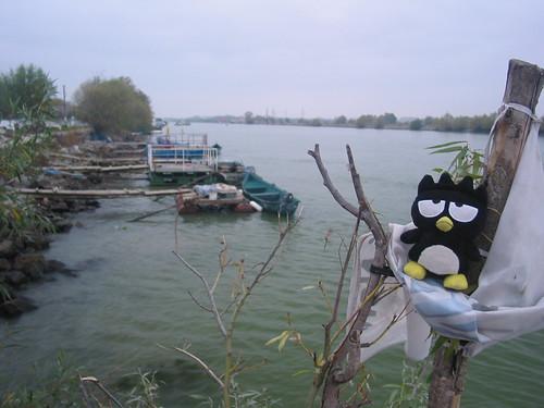 "Stalna postavka slika ~ ""Dunav"" - Page 2 3008590906_3a15cba31d"