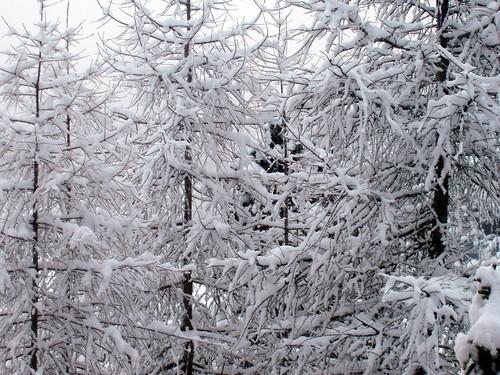 La purezza della Neve 2968287484_5babdcd73d