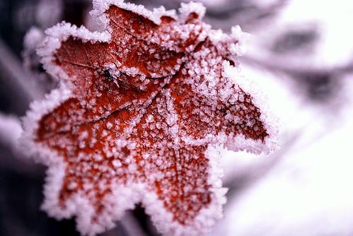 А за окном зима... 3155942929_609a3cf6b0