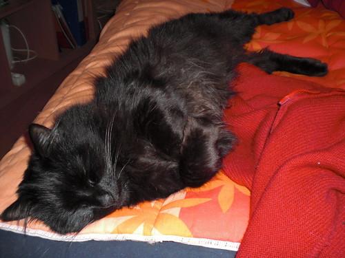 Loulou, angora turc noir 3116996412_0072e69afe