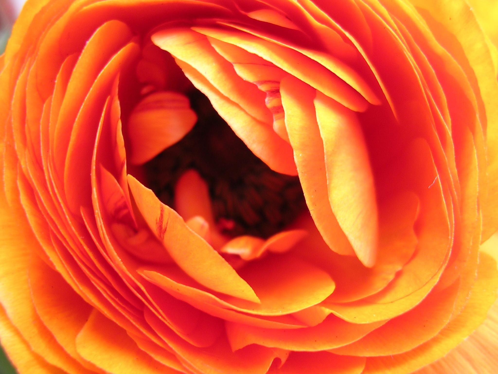 Narandzasta magija - Page 2 2436225494_0ba1541d73_o