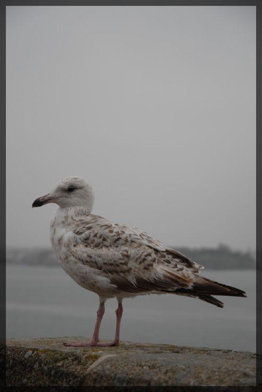 Animaux, oiseaux... etc. tout simplement ! - Page 6 2730867779_fd2f1e41a3_o