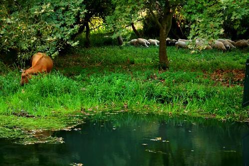 Foto te bukura nga Natyra - Faqe 2 2902328462_919c477d56