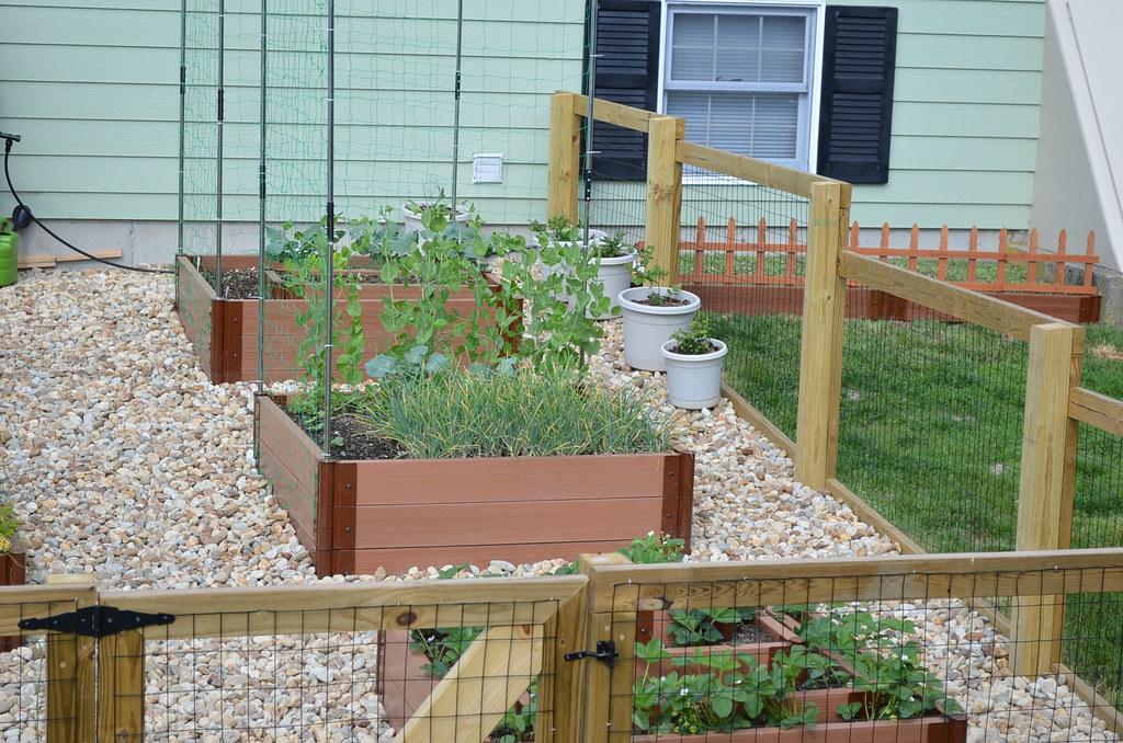 New garden from Dartmouth,MA (pics) 5794469255_dbd350139a_b