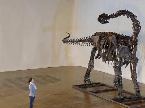 Un dinosaure dans la Chambre de Commerce ! 3198878837_701e4993b4
