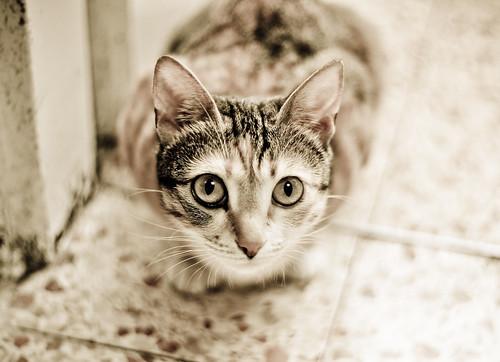 Sepia Kitty