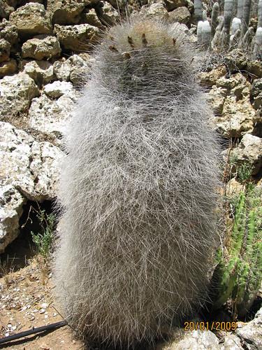 Outdoor cactus garden in riverland 4607836334_54995304ba