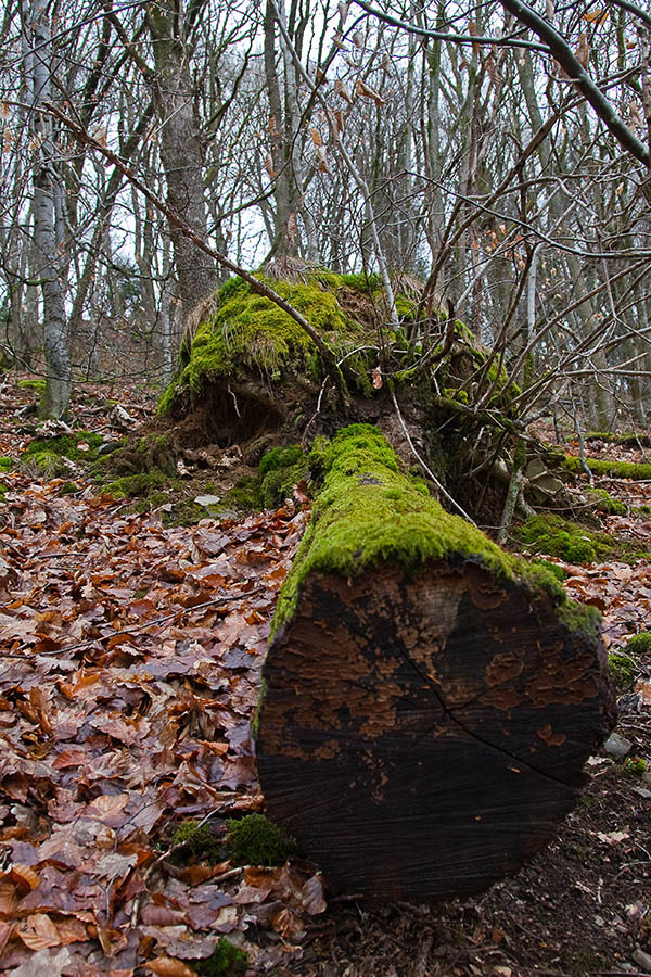 Sortie à Engreux le 21 Février 2009 : Les photos 3310114326_bca216a3c6_o