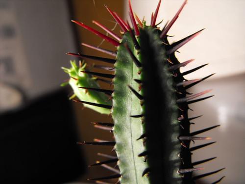 cacti ID's 3279947344_4c213e39ab