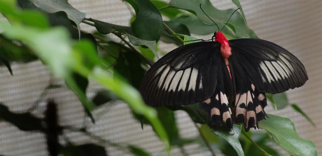 La serre aux papillons la queue en yvelines 5794418570_458a55c103_o