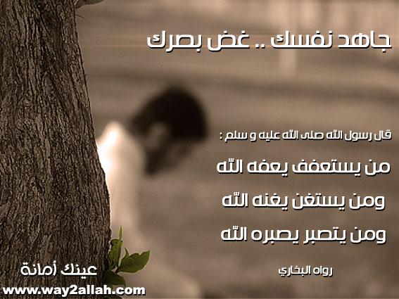 حملة عيـــــنك أمانة  3488958691_fd8bd4df91_o