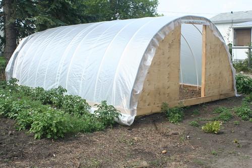 Greenhouse dreams 3762853873_0a0710f56d