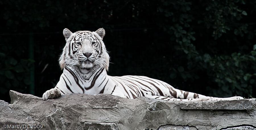 Sortie Animaux au Zoo d'Olmen le 16 août - Les photos - Page 2 3837361237_a4a383da27_o